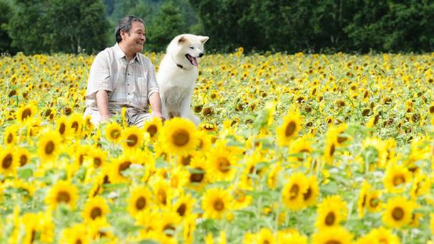 ペット動物映画星守る犬