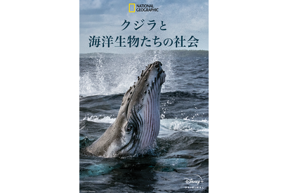 「クジラと海洋生物たちの社会」(C) 2021 NGC Network US, LLC. All rights reserved.