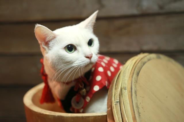 猫とPCケース 47台目 [転載禁止]©2ch.netYouTube動画>10本 ->画像>906枚
