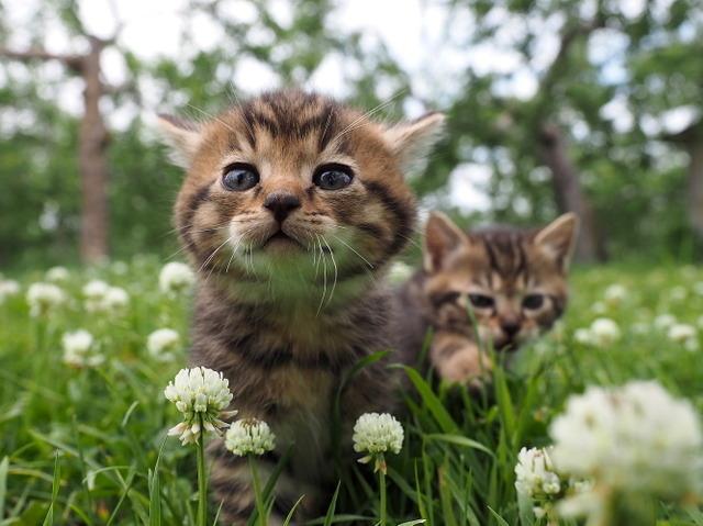 『劇場版 岩合光昭の世界ネコ歩き コトラ家族と世界のいいコたち』 (C)Mitsuaki Iwago