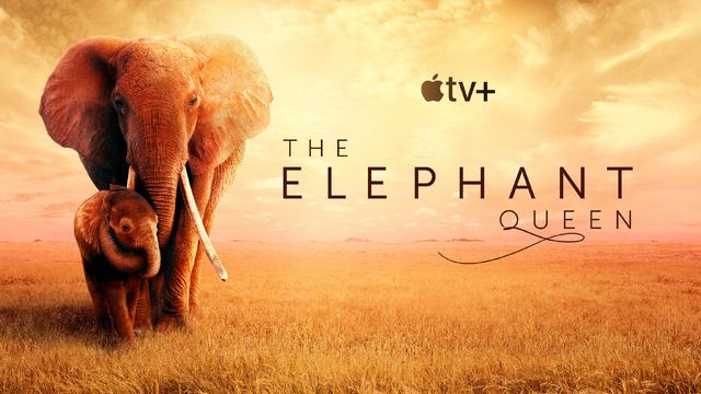 『ゾウの女王:偉大な母の物語』