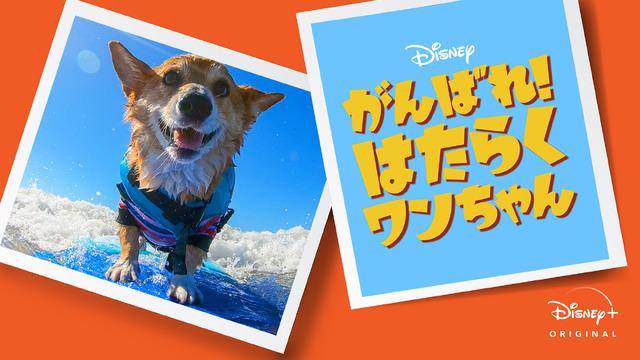 「がんばれ!はたらくワンちゃん」8月7日(金)よりディズニープラスで配信開始 (C) 2020 Disney
