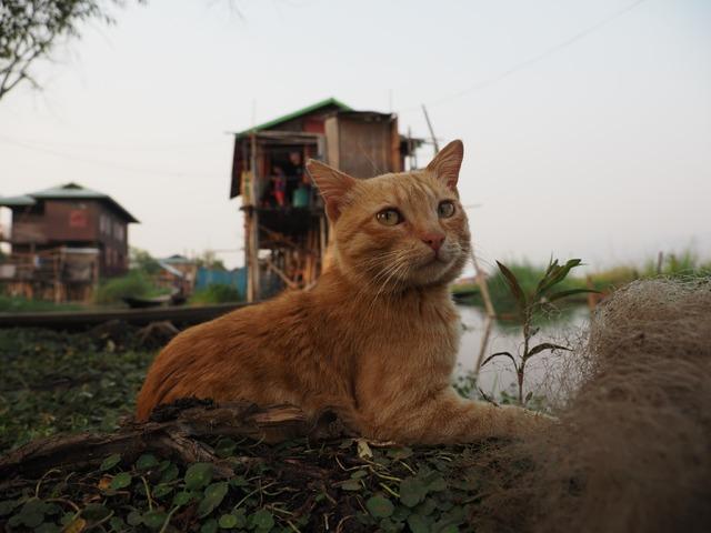 『劇場版 岩合光昭の世界ネコ歩き あるがままに、水と大地のネコ家族』(C)「劇場版 岩合光昭の世界ネコ歩き2」製作委員会 (C)Mitsuaki Iwago