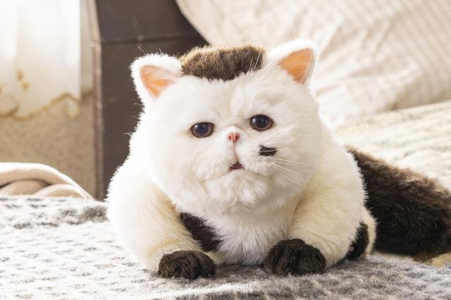 「おじさまと猫」(C)「おじさまと猫」製作委員会
