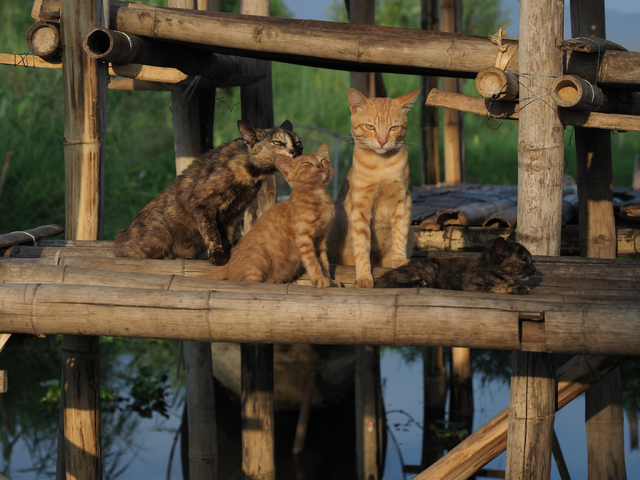 『劇場版 岩合光昭の世界ネコ歩き あるがままに、水と大地のネコ家族』 (C)「劇場版 岩合光昭の世界ネコ歩き2」製作委員会 (C) Mitsuaki Iwago