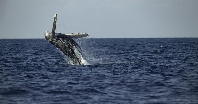 「クジラと海洋生物たちの社会」(C) 2021 NGC Network US, LLC. All rights reserved.
