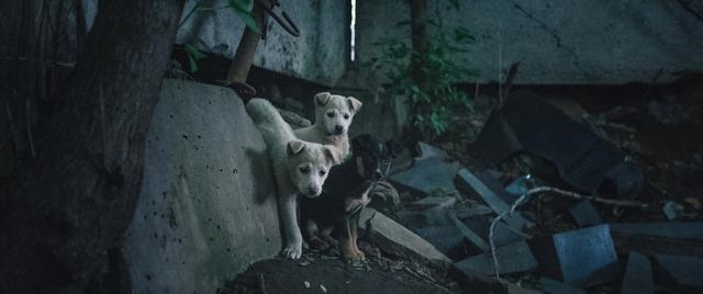 『犬は歌わない』(C)Raumzeitfilm